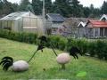 kwekerij-amsterdamscheveld-vogels-02