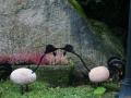 kwekerij-amsterdamscheveld-vogels-05