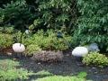kwekerij-amsterdamscheveld-vogels-08