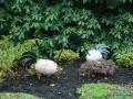 kwekerij-amsterdamscheveld-vogels-10
