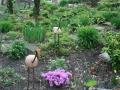 kwekerij-amsterdamscheveld-vogels-14