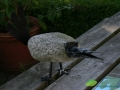 kwekerij-amsterdamscheveld-vogels-18