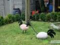 kwekerij-amsterdamscheveld-vogels-20