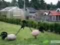 kwekerij-amsterdamscheveld-vogels-21