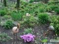 kwekerij-amsterdamscheveld-vogels-32